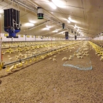 Feeding and drinking systems